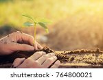 hands transplanting young plant ... | Shutterstock . vector #764800021