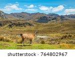 landscape inside the cajas... | Shutterstock . vector #764802967