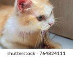 ginger cat eating lizard ... | Shutterstock . vector #764824111