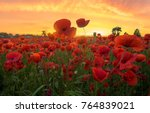 Red Poppies In The Light Of Th...
