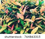 nature background concept ... | Shutterstock . vector #764863315