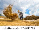 the farmer was hitting the rice ... | Shutterstock . vector #764930209