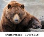Grizzly bear portrait - stock photo