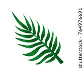 green areca palm leaf vector... | Shutterstock .eps vector #764976691