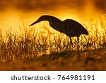 heron and orange yellow sunset. ... | Shutterstock . vector #764981191