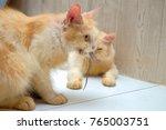 ginger cat eating lizard ... | Shutterstock . vector #765003751