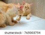 ginger cat eating lizard ... | Shutterstock . vector #765003754