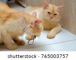ginger cat eating lizard ... | Shutterstock . vector #765003757