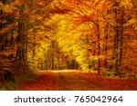 beautiful sunny autumn... | Shutterstock . vector #765042964