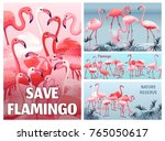 Posters Nature Reserve Flamingo....