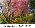 cherry blossoms are blooming in ... | Shutterstock . vector #765112969