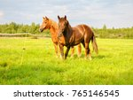 Stock photo two horses portrait in nature 765146545