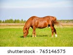 Small photo of Chestnut horse grazing