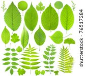 collection of green leaf | Shutterstock . vector #76517284