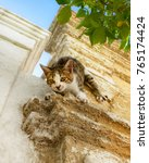 Small photo of Cute little tabby kitten climbs headlong and sportive down a house wall, using its claws, Rhodes, Greece