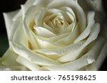 Stock photo roses white roses 765198625