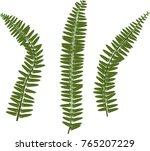 green fern leaves on white... | Shutterstock .eps vector #765207229