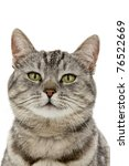 Head Cat  On White Background