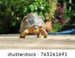 portrait of radiated tortoise... | Shutterstock . vector #765261691