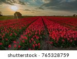 duch flower field sunset... | Shutterstock . vector #765328759