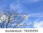 Dry Tree Under Blue Sky