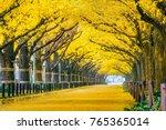 row of yellow ginkgo tree in... | Shutterstock . vector #765365014