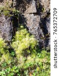Small photo of travel to Iceland - green rock wall of Almannagja Fault in Thingvellir national park in autumn