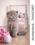 Stock photo scottish kitten portrait cat at home scottish fold cat purebred cats pet playful kitten 765421807