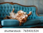 The Dog Lies On The Blue Couch...