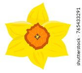 Vector Illustration  Daffodil ...