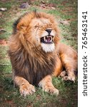 portrait of a majestic male... | Shutterstock . vector #765463141