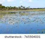 Small photo of Lily pads and other marsh vegetation in Savannas Preserve State Park, which preserves freshwater marshes, or savannas, along Florida's east coast.