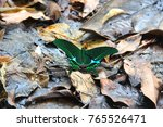 Small photo of butterfly, lepidoptera, insect