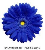 blue  gerbera flower  white... | Shutterstock . vector #765581047