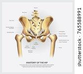 human anatomy of the hip vector ... | Shutterstock .eps vector #765588991