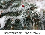 spruce branch covered with...   Shutterstock . vector #765629629