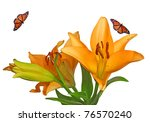 Bright Orange Lillies With...