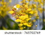 yellow flower background and... | Shutterstock . vector #765702769
