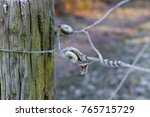 Closeup Of Barbed Wire Covered...