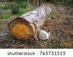 a tree log trunks on grass... | Shutterstock . vector #765731515