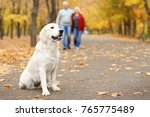 Stock photo cute dog on pathway in park with blurred couple on background 765775489
