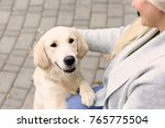 mature woman with her dog... | Shutterstock . vector #765775504