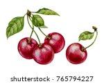 Cherry. Watercolor Botanical...