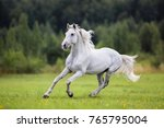 white horse runs gallop on the... | Shutterstock . vector #765795004