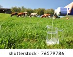 Pouring a jug with milk against herd of cows. Emmental, Switzerland - stock photo