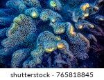 "macro image leather ""toadstool"" ... | Shutterstock . vector #765818845"