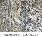 old wood texture bark texture... | Shutterstock . vector #765876067