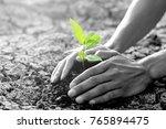 men hands are planting the... | Shutterstock . vector #765894475