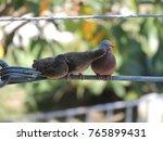 birds family kissing | Shutterstock . vector #765899431
