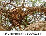 closeup of a  leopard ... | Shutterstock . vector #766001254